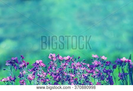 Soft Flower Background. Pink Flowers On A Emerald Natural Background. Beautiful Blurrred Bokeh. Summ