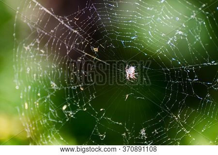 Close-up Of Spider On A Spider Web. Spider On Its Web Waiting To Catch Prey.
