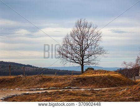 Lonely Tree In Autumn Field. Windy Gloom Flatland