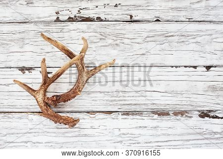 Real White Tail Deer Antlers Over A Rustic Wooden Table. These Are Used By Hunters When Hunting To R