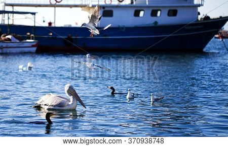 Animal Bird Pelican And Seagull And The Sea In Dock Photo