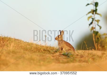 Rabbit In Spring Flowers. Cute Rabbit With Flower Dandelion Sitting In Grass. Animal Nature Habitat,