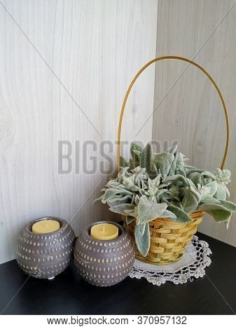 Plant Woolly Stachys With Soft Fluffy Leaves In A Wicker Basket With Two Shaffron Candles On A Light