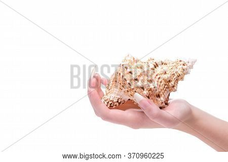 Concept Of Strong And Healthy Nails. Female Hand Holds Shell. Beautiful Fingernails Closeup. Healthy