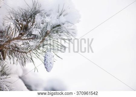 Pine Branch With Cones In Snow Stock Photo.decorative Toy Silver Bump On The Branch Of A Christmas T