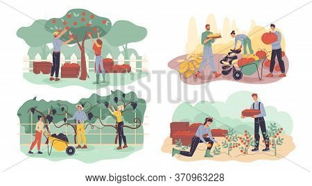 Farmer Gathering Fruit, Berry, Vegetable Harvest Set. Garden Agriculture Horticulture Autumn Crop Co