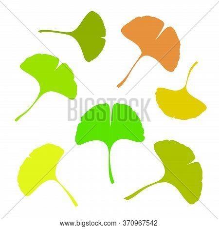Ginkgo Or Gingko Biloba Leaves Set. Nature Botanical Vector Silhouette Illustration, Herbal Medicine