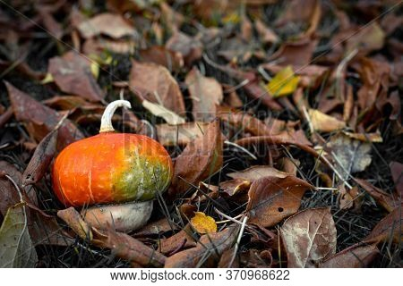 Decorative Pumpkin On Withered Leaves. Autumn Background.