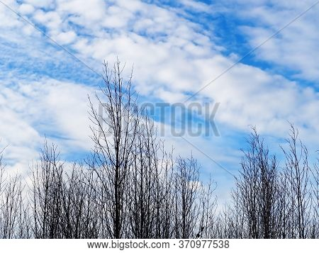 Beautiful Of Lanscape With Tree And Sky.
