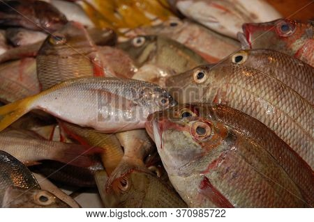 Raw Fish Fresh Catch From Sea Selling In Public Market