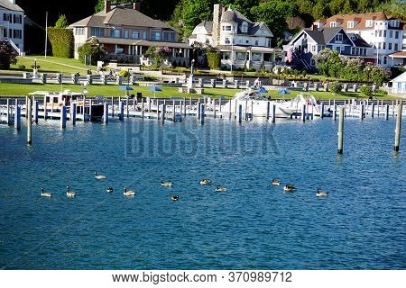 Mackinac Island, Michigan / United States - June 11, 2018: A Flock Of Canada Geese (branta Canadensi