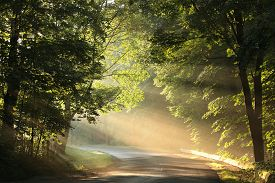 Country road park forest path trail sunrise Nature background sun pathway Nature background landscape Nature background alley trees Nature background sunbeams Nature background mist fog Nature background light Nature background rays Nature background.