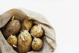 Unpeeled Sprouted Potatoes In A Burlap Sack On A White Background.