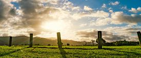 New Zealand green field sunrise or sunset