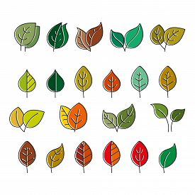 Vector Color Set Of Leaves For Decoration The Illustrations, Scrapbooking And Coloring Books