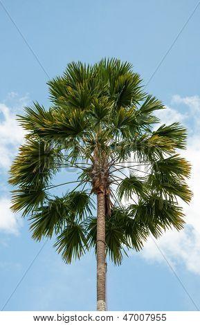 Tropical Palm Tree Under A Blue Sky