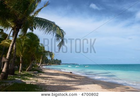 Tropical Beach In Brazil