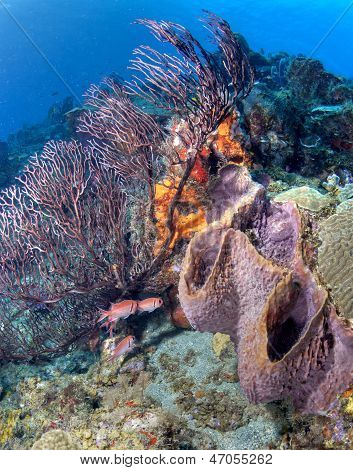 St Lucia Sponge And Coral