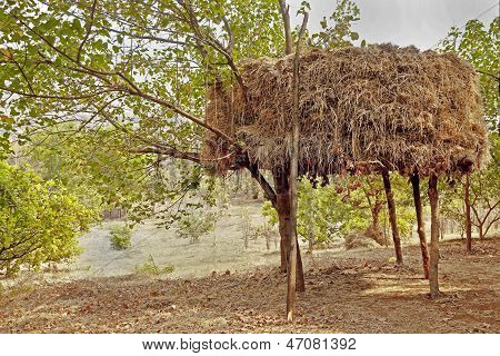 Indian Haystack On Stilts In An Orchard
