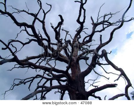 Tree, Bare, Harsh, Reaching To The Sky Like Fingers
