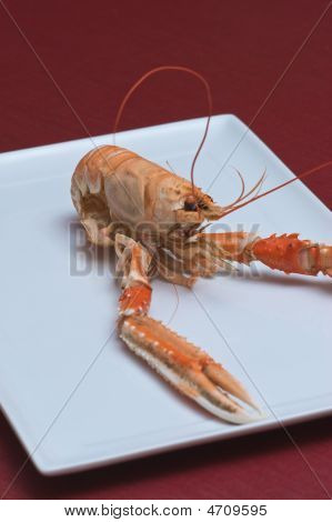 Nephrops norvegicus or Norway lobster is a decapod found in the northsea area. It is common used as a gourmet food. Either boiled whit salt (natural) or as a ingredient in fish soup etc. Taste like shrimp but with a mixture of soft and spicy at the same t poster