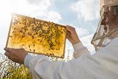 Beekeeper holds frame with honeycomb at bee colonyagainst the sun poster