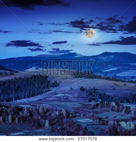 Coniferous Forest On A Steep Mountain Slope At Nidght