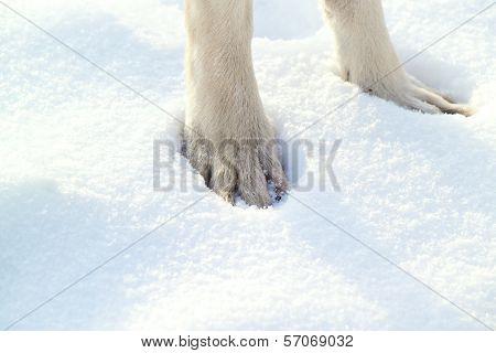 Dog`s Paw
