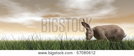 One quiet hare standing in the grass by brown sunset poster