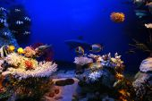 Underwater background - fishes and coral. Beauty nature. poster
