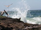 several birds on rocks and flying away from incoming wave of ocean water poster