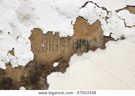 Mould On Plaster And Peeling Paint Indicating Rising Damp