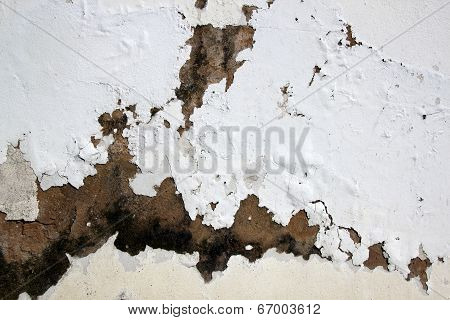 Fungus And Flaking Paint Due To Rising Damp