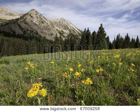 East Beckwith Mountain by Kebler Pass