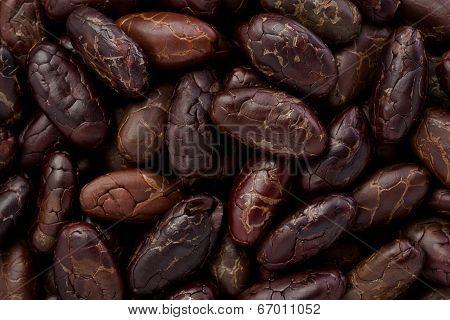 Whole Cacoa Nibs (theobroma Cacao)