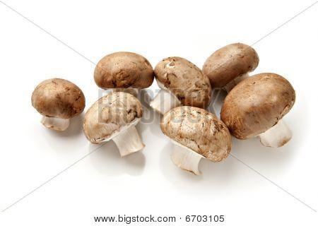 Whole Cremini Mushrooms Isolated on White Background poster