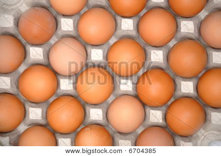 Eggs In Protective Pack