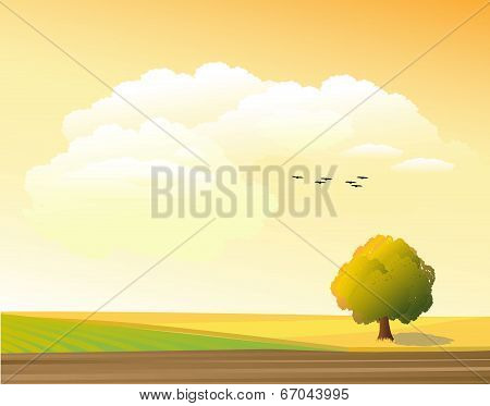 tree in the meadow