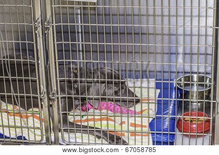 Sick Dog In Cage