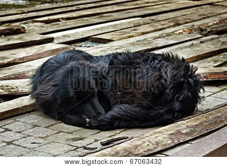 Sad Black Dog Is Laying On Outdoors