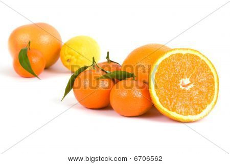 Different Citrus