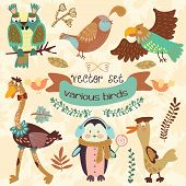 Vector Set of with cute various birds.Penguin ostrich eagle owl duck quail bird .(All objects are isolated groups so you can move and separate them) poster