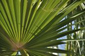 Green and sunshine, hot and warm, this is weather for nice palm tree... poster