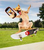 a chihuahua taking a selfie while riding a skateboard poster