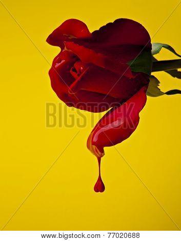 Rose on Yellow
