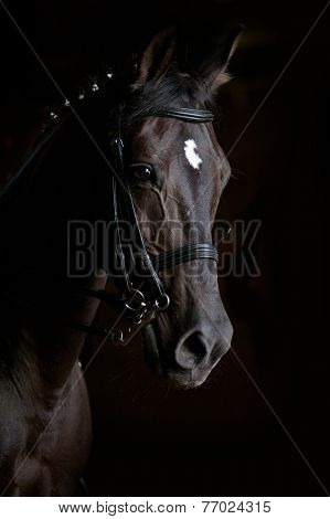horse on a black