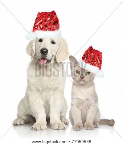 Dog And Cat In Santa Red Hat