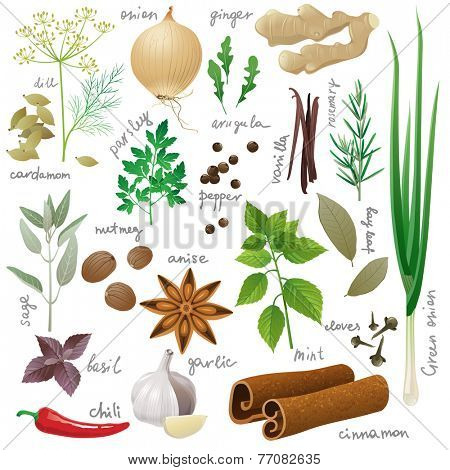 Large set of herbs and spices