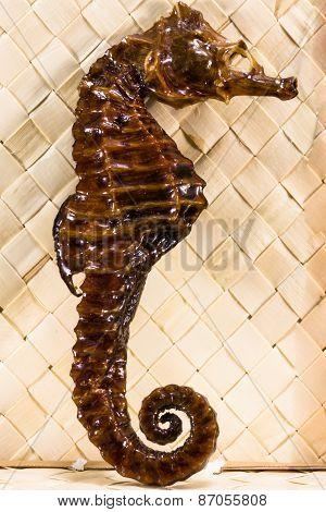 Real Brown Stuffed Sea Horse