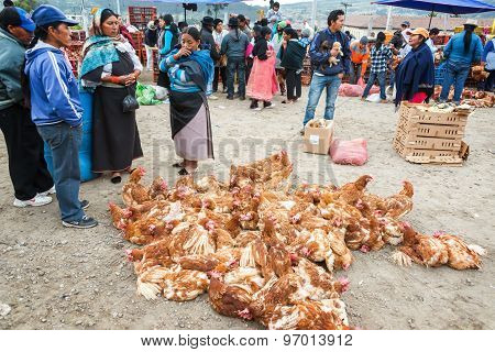 Chickens At Market